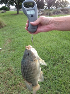 VP Rob Husson Weighs Tilapia 2 lb 4 oz Fly Rod