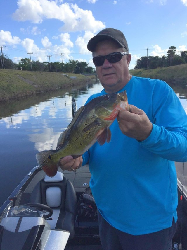 Bob Knorr fished canals in Miami for Peacock Bass. Bucket list anyone?